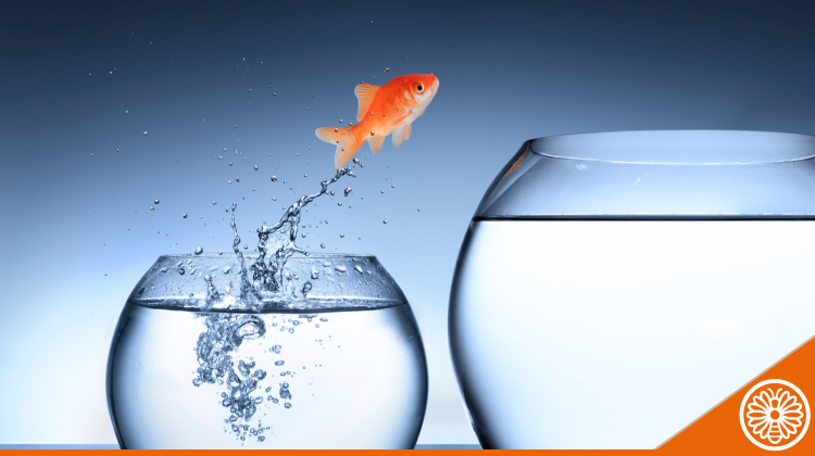Featured-Image_Goldfish-Jumping-to-Larger-Bowl